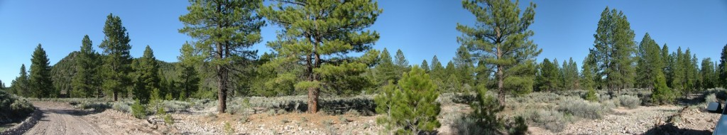 This 180-degree panorama of a stand of trees was shot with an ordinary JPEG camera and stitched using Panotools extensions. Under uniform lighting conditions it is not mandatory to use RAW and Photoshop to produce a clear final result.