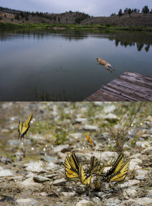 The same 18-200m Nikon zoom lens took both of these photographs. Versatility is crucial for a field photography setup.